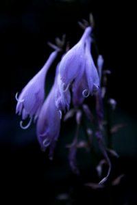 Kukka 1