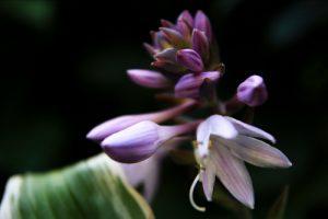 Kukka 2